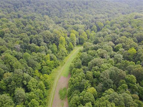 27.7 Acres That Borders Hoosier Na : Shoals : Martin County : Indiana