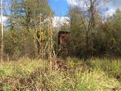 McCarty Road at Drake Creek Tract : Tullos : La Salle Parish : Louisiana