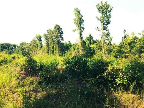 Bayou Bourbe Tract, Grant Parish : Verda : Grant Parish : Louisiana