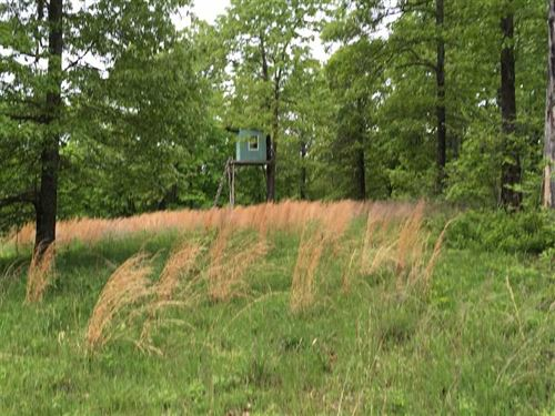80 Acres Loaded With Whitetail : Mammoth Spring : Fulton County : Arkansas