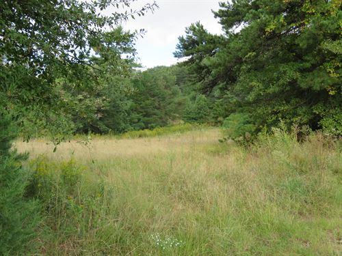 Bird Mountain Tract : Landrum : Spartanburg County : South Carolina