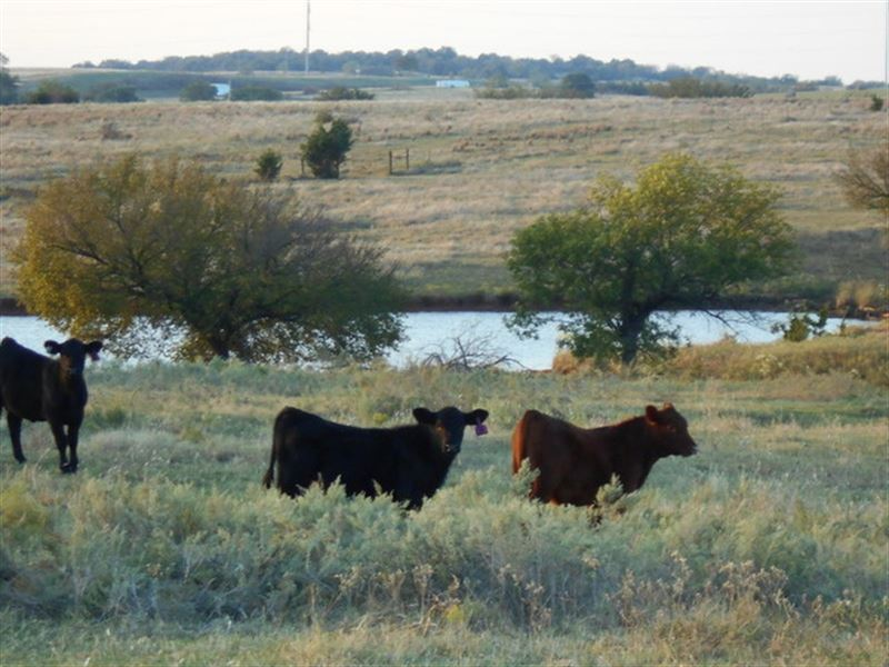 11/13 Auction 211 Acres Of Pasture : Orlando : Payne County : Oklahoma