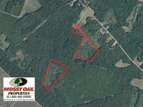 Reduced, 70.2 Acres of Hunting an : Greeleyville : Williamsburg County : South Carolina