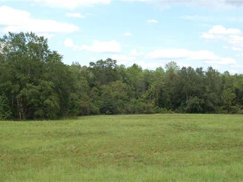 Pasture And Big Woods : Clio : Barbour County : Alabama