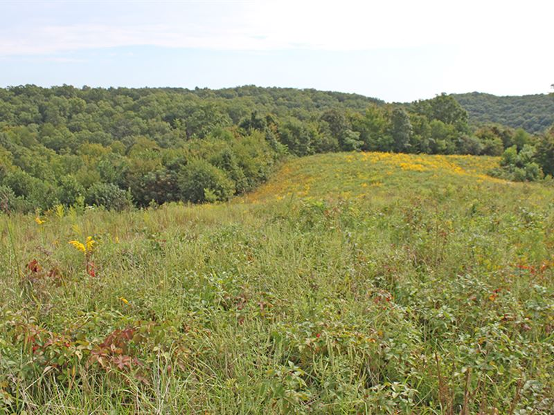 Super Hunting/Recreational Property : Green Twp. : Scioto County : Ohio