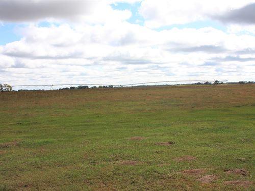 Holt County Irrigated Pasture : O'neill : Holt County : Nebraska