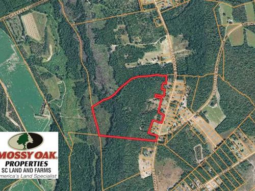 Under Contract, 45 Acres of Hunti : Bishopville : Lee County : South Carolina