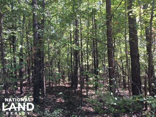 Mill Creek Hunting & Timber Tract : Fayette : Alabama