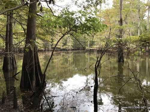 116 Ac - Recreational Tract With Ri : Jasper : Texas