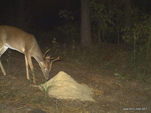 233 Ac, Timberland & Hunting : Columbia : Caldwell Parish : Louisiana