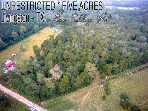 5 Acres In Polk County : Livingston : Polk County : Texas