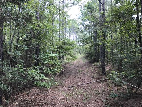 440 Acres in Perry County Near Spr : Sprott : Perry County : Alabama