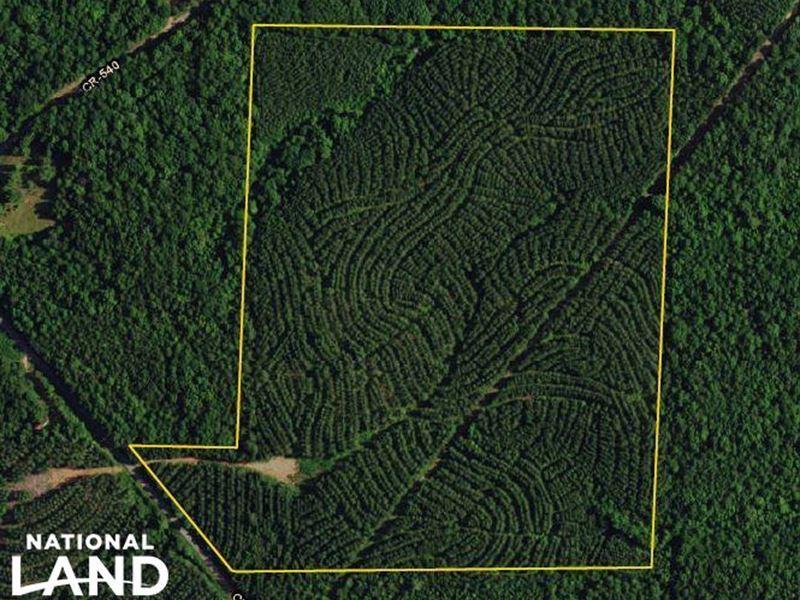 County Road 25 Timber Investment : Heflin : Randolph County : Alabama