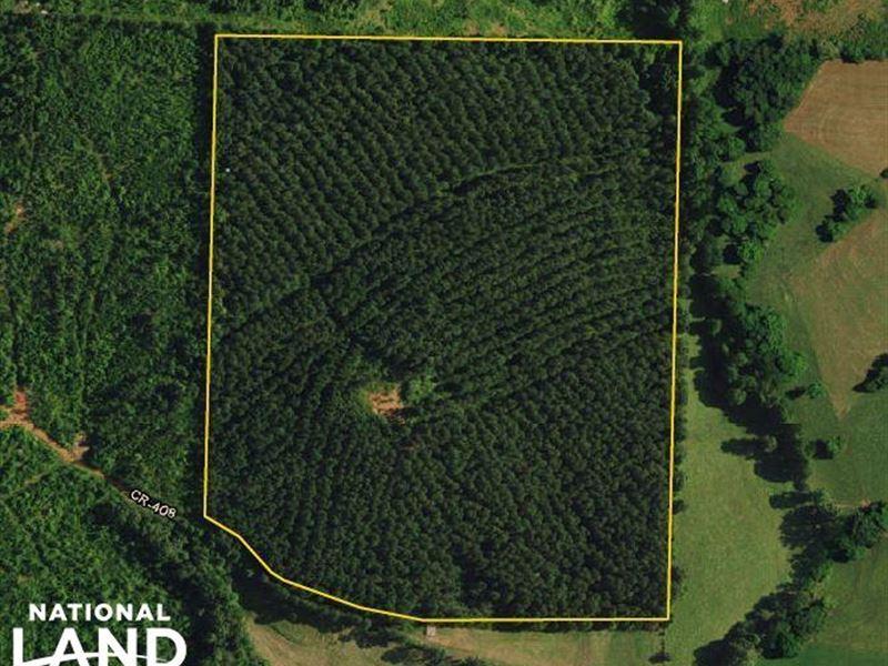 Woodland Timber Investment : Woodland : Randolph County : Alabama