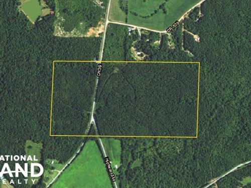 County Road 39 Timber Investment : Woodland : Randolph County : Alabama