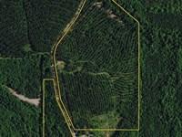 Chambers County Timber Investment : Roanoke : Chambers County : Alabama