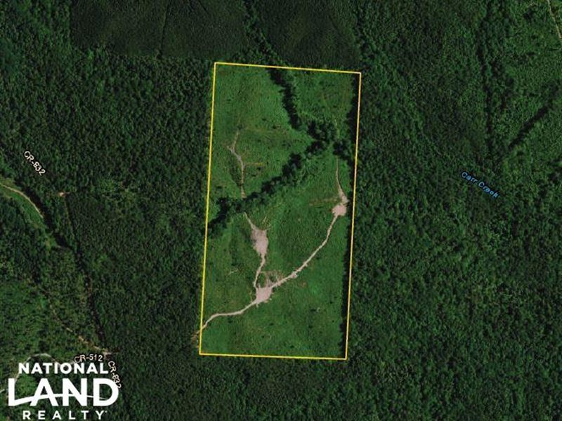 Carr Creek Timber Investment : Delta : Cleburne County : Alabama