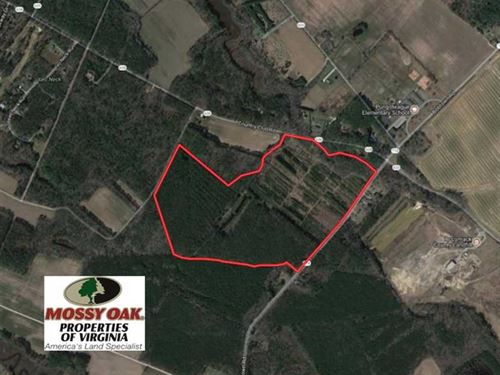 Under Contract, 103 Acres of Hunt : Melfa : Accomack County : Virginia
