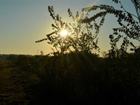 All IN One Property - 193 Acres : Wichita Falls : Archer County : Texas