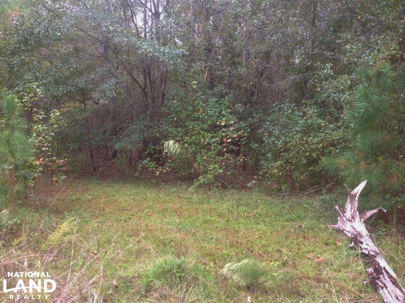 Hunting And Timber Acreage : Sumter : Sumter County : South Carolina