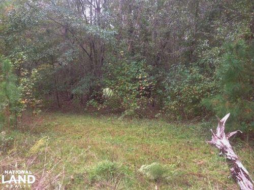 Hunting And Timber Acreage : Sumter : South Carolina