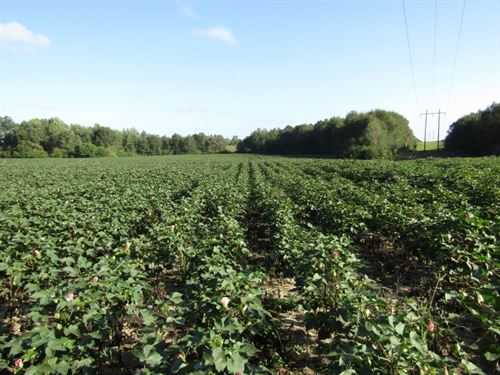 60 Acres In Pearl River County, Ms : Lumberton : Pearl River County : Mississippi