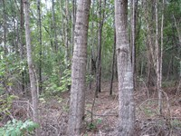 Dixon Mills 100 Ac With Pond : Dixon Mills : Marengo County : Alabama