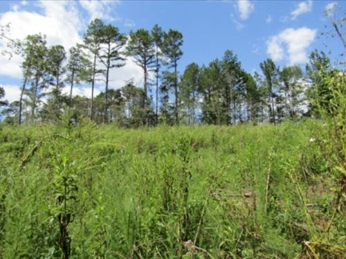 81 Acres In Holmes County : Durant : Holmes County : Mississippi