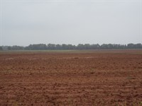 400 Acres Offered In 3 Tracts : Custer City : Custer County : Oklahoma