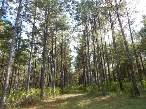 306 Acre, Timber Inv, & Hunting : Sandy Hook : Walthall County : Mississippi