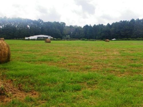 Home Camp Pasture Tylertown Walthal : Tylertown : Walthall County : Mississippi