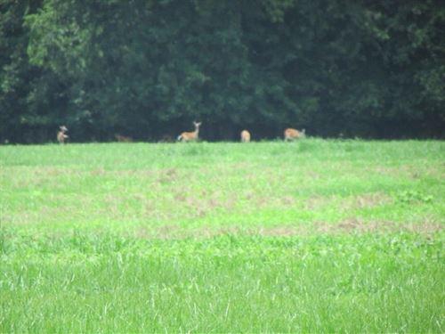Back Swamp Tract : Lynchburg : Lee County : South Carolina