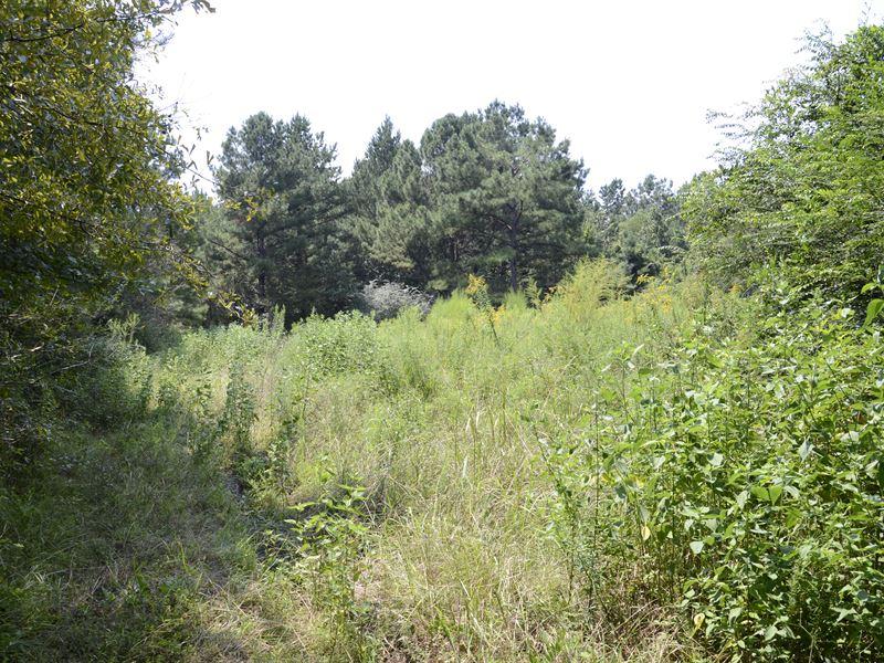 Dream Investment : Brandon : Rankin County : Mississippi
