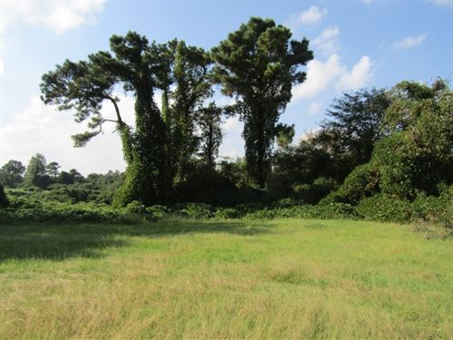 75 Acres In Lafayette County : Como : Lafayette County : Mississippi