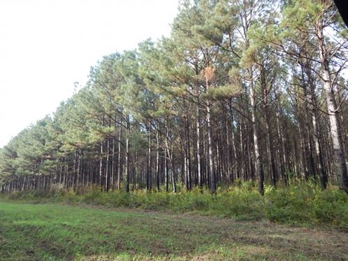 207 Acre -Hunting & Investment : Sandy Hook : Walthall County : Mississippi