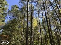 Whitehall Rd. Timber And Hunting La : Bradley : Greenwood County : South Carolina