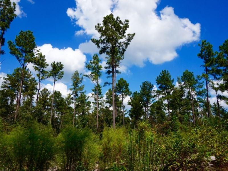 79 Acre Timber/ Development Acreage : Benton : Bossier Parish : Louisiana