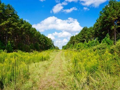 120 Acre Timber And Recreational Ac : Benton : Bossier Parish : Louisiana