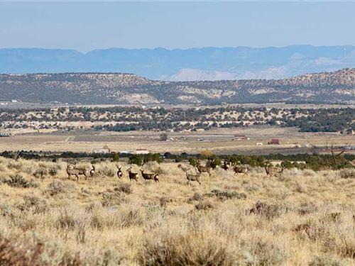 Western Colorado 35 Acre Lot For : Glade Park : Mesa County : Colorado