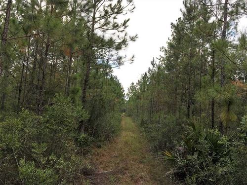 48 Acres Land For Sale Camden : White Oak : Camden County : Georgia