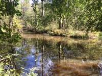 Riverfront Hunting Tract : Tennille : Washington County : Georgia