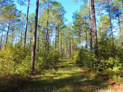 Pine Timber Investment : Eatonton : Putnam County : Georgia