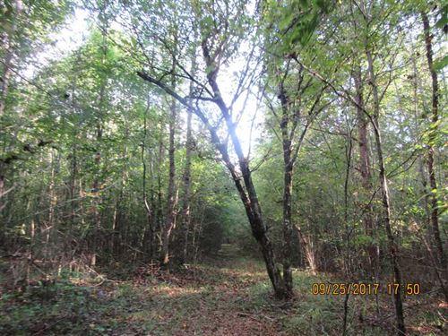 Tishomingo Recreation And Timberla : Booneville : Tishomingo County : Mississippi