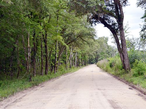 Pinehatchee West Hunting Tract : Mayo : Lafayette County : Florida