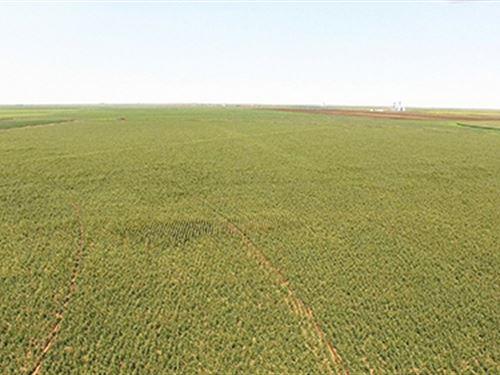 Irrigated Farmland Auction : Dumas : Hartley County : Texas