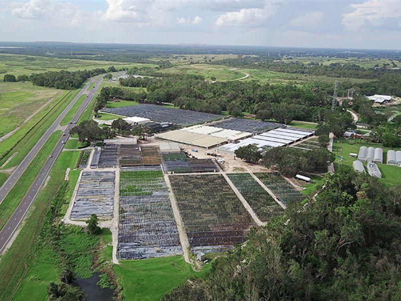 Sunshine Fort Meade Nurseries : Fort Meade : Polk County : Florida