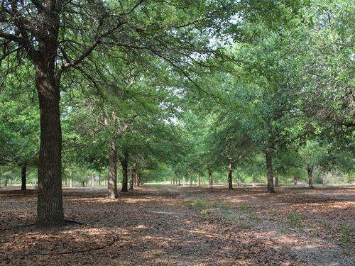 McMillan Tree Farm - Tract 3 : Ehrhardt : Bamberg County : South Carolina
