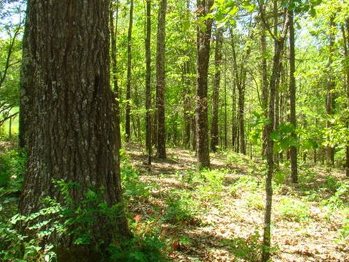 Secluded Acres - Live Off The Grid : Birch Tree : Shannon County : Missouri