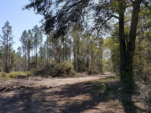Additional Acreage Available : Albany : Dougherty County : Georgia