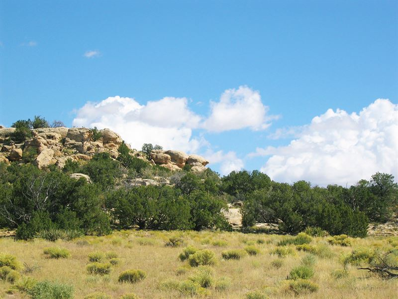 Arizona's Best Wilderness Ranch : Saint Johns : Apache County : Arizona